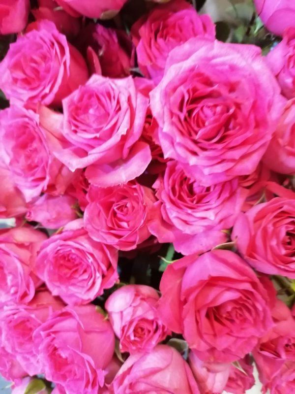 Bouquet de roses couleur