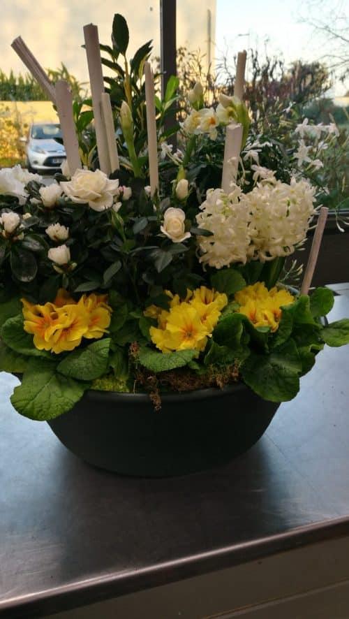 Coupes de plantes jaune et blanc