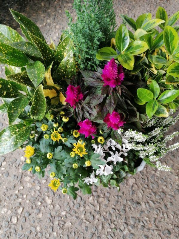 Coupe de plantes tons roses et jaunes