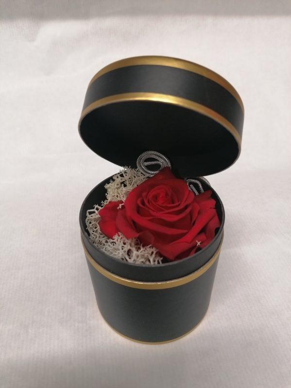 rose eternelle en boitage
