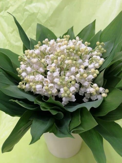 muguet en bouquet